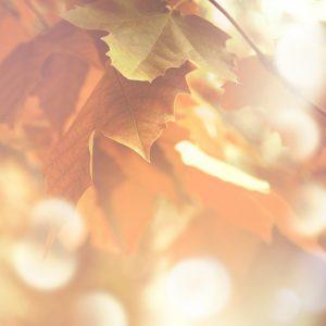 Autumn Statement
